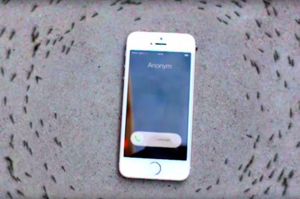 furnici iphone