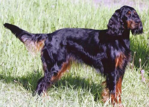 sursa foto: www.dogwallpapers.net