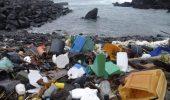 Aproape toate pasarile marine vor ingurgita plastic pana în 2050