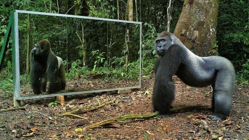 Reactii surprinzatoare ale animalelor, cand se privesc in oglinda