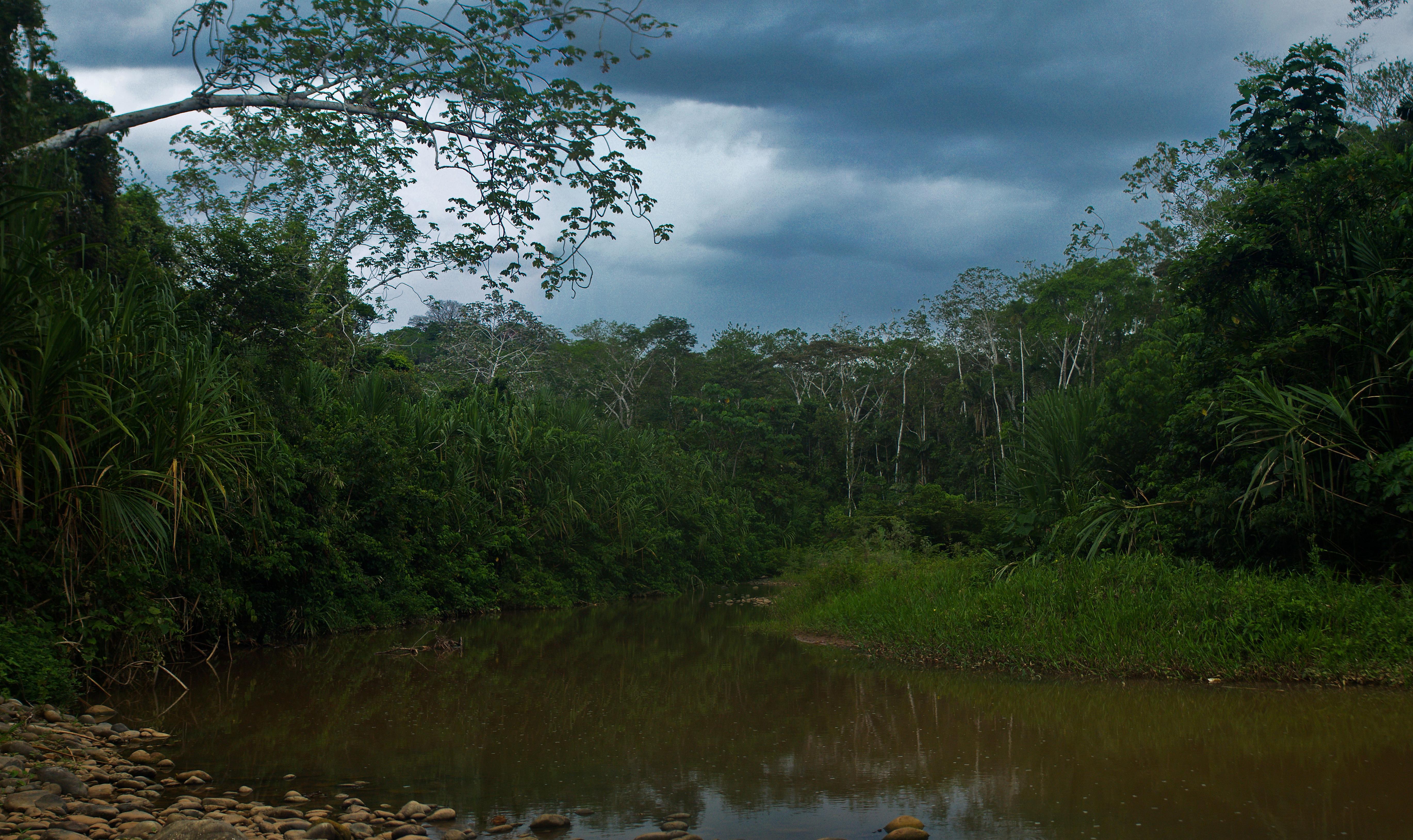 Imagine din Parcul National Madidi/ Bolivia