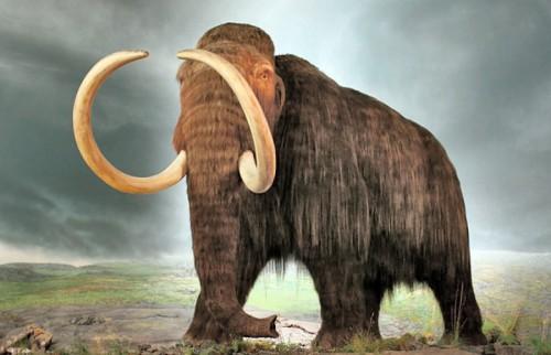 Rusia a deschis un institut de cercetare, pentru a studia posibilitatea de a clona mamuti