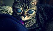 Matilda, pisica extraterestra!