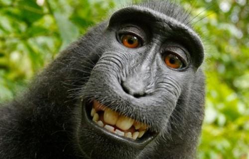 PETA cere drepturi de autor pentru Naruto