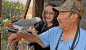 Papagalul pierdut al unui englez a fost găsit vorbind spaniola