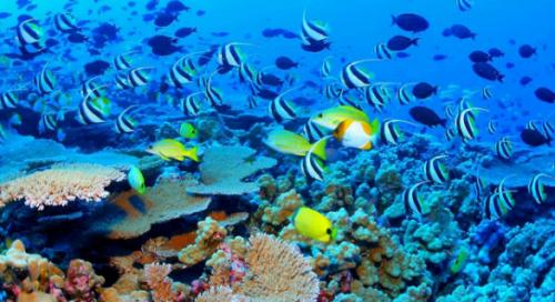 Inca un sanctuar marin in Pacific