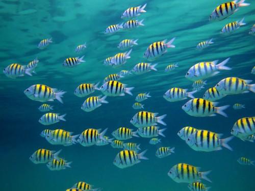 Vietatile oceanelor, in pericol!