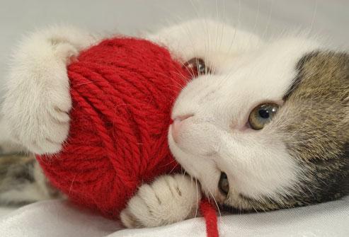 pisica ghem