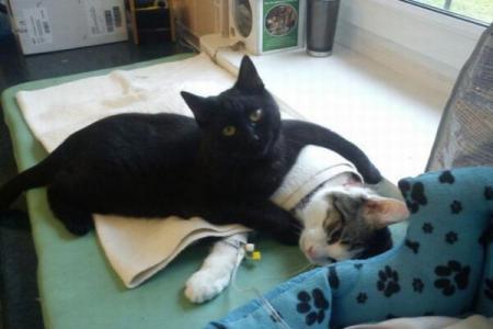 pisica-infirmiera-01