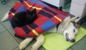 """""""Pisica infirmiera"""" pentru animale"""