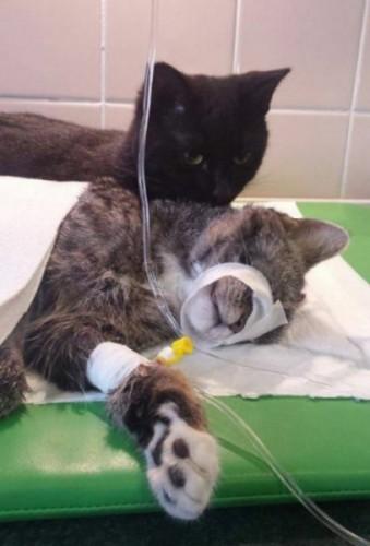 pisica-infirmiera-03