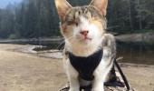 pisica nevazatoare