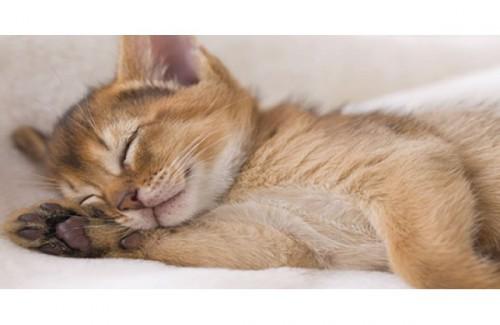 pisica somn2