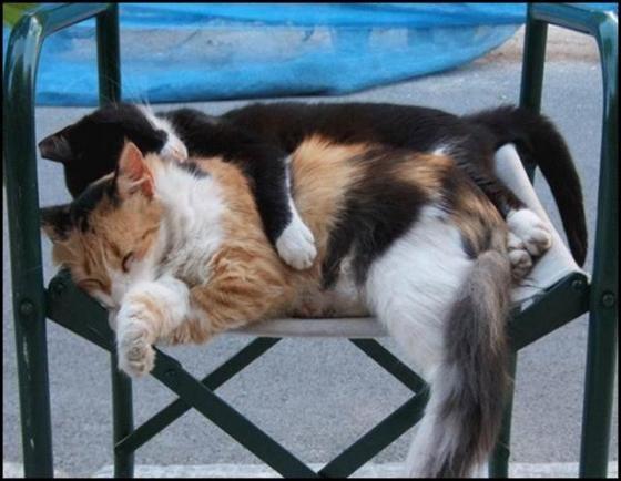 pisica somn3
