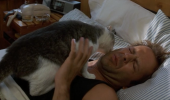 Ce spune pisica pe care ai adoptat-o despre tine?