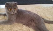 pisica2