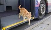 pisica_in_autobuz_0