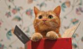 pisica_in_cutie