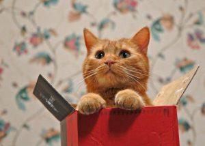 Oare sunt pisicile obsedate de cutii?