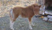 Vreau un ponei