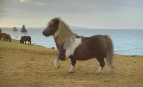 ponei2