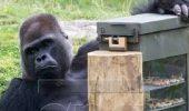 Automate cu snacksuri, pentru maimute
