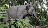 Dupa leul Cecil, uciderea elefantului Yongki provoaca un val de indignare