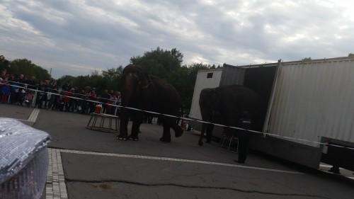 elefanti, circul globus, iesind din camionul de transport