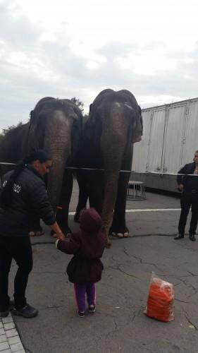 elefanti circul globus