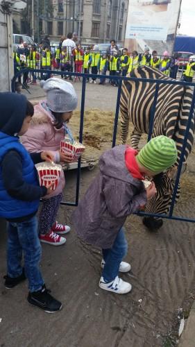 Start in noua stagiune a Circului Globus! Ce animale au vizitat, ieri, Parcul Tineretului?
