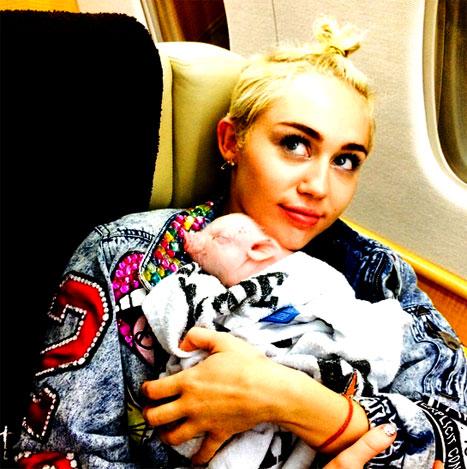Miley Cyrus cu porcusorul