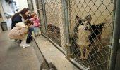 Brasov – exemplu de buna practica in rezolvarea problemei cainilor maidanezi. 560 de adoptii in 2015!