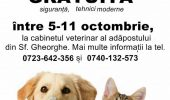 Prima campanie gratuita de sterilizare a cainilor si pisicilor din Sfantu Gheorghe, oprita de Colegiul Medicilor Veterinari
