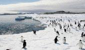 Discutii pe tema protectiei faunei si florei marine vii, din Antarctica!