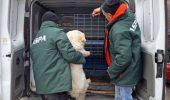 30.000 de caini eutanasiati in mai putin de 1 an si jumatate! 200 de lei de maidanez prins!