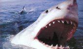 Premiera mondiala – strategie globala de lupta impotriva atacurilor rechinilor. Ce tehnologie este scoasa la bataie?