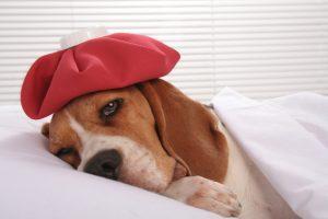 Ce este parvoviroza canina?
