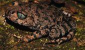 Uimitor: peste 200 de specii noi descoperite in ultimii 5 ani in Estul Himalayei