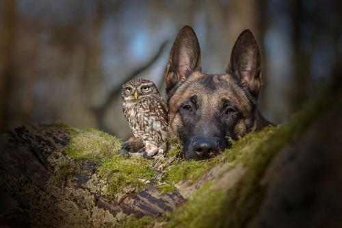 """Atentie: fotografii care-ti vor merge la inima….""""Iubesc frumusetea, puterea, loialitatea si curajul animalelor""""!"""