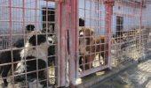 Raport UE: Legea "Ionut Anghel", efecte negative in controlul cainilor comunitari!