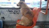 S-a votat! Afla unde cainii pot circula cu autobuzul, daca au bilet!