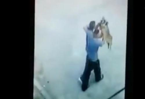 Imagini cu un puternic impact emotional! Bestiei din Bocsa, care a stalcit in bataie un caine, si amicului care a filmat – li s-au intocmit dosare penale!