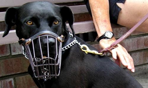 Sfaturi de la cunoscutul dresor Cesar: Cum dezveți câinele să muște
