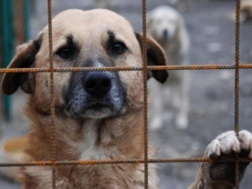 Un deputat independent ii scrie presedintelui Iohannis despre abuzurile cumplite asupra animalelor, in Romania