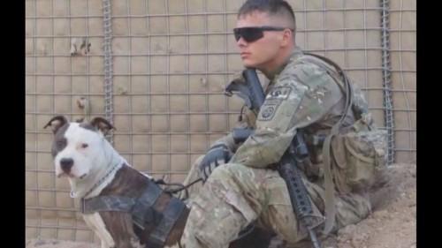 Un soldat in rezerva lupta acum pentru cainele care i-a fost alaturi pe front!