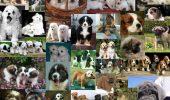 Îți dorești neapărat un prieten CANIN? Medicul veterinar ne ÎNVAȚĂ cum sa ne ALEGEM unul