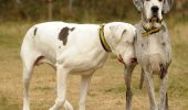 Sunt animalele doar niste masinarii cu sange, incapabile sa gandeasca sau sa simta emotia?