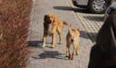 Premiera pentru Timisoara! A inceput prima campanie pentru sterilizarea gratuita de caini si pisici