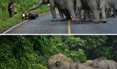 Viralul cu motociclistul care cere scuze unor elefanti!