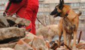 Exclusiv Animal Zoo! Cum puteti deveni – tu si cainele tau – voluntari in echipa Crucii Rosii, Divizia canina? Astazi se fac recrutarile!